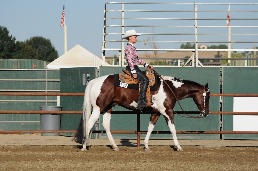 Western Horse Silhouettes Western Pleasure Show Horses