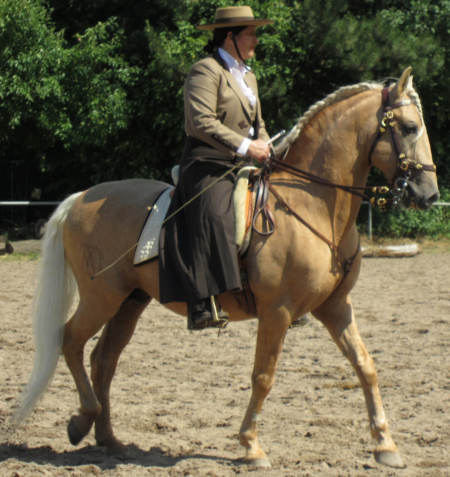 The above horses are in order from left to right: a Lusitano, an ...